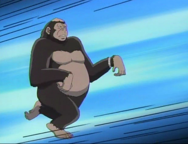 Comme pourquoi y a t il un gorille dans le lycée...